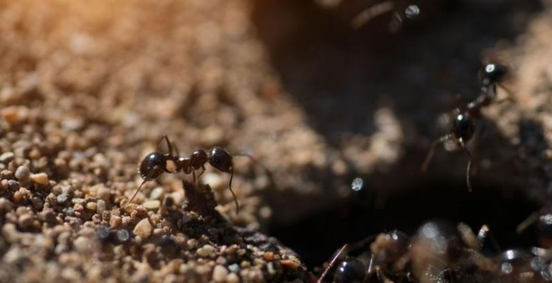 Interesting Pest Facts